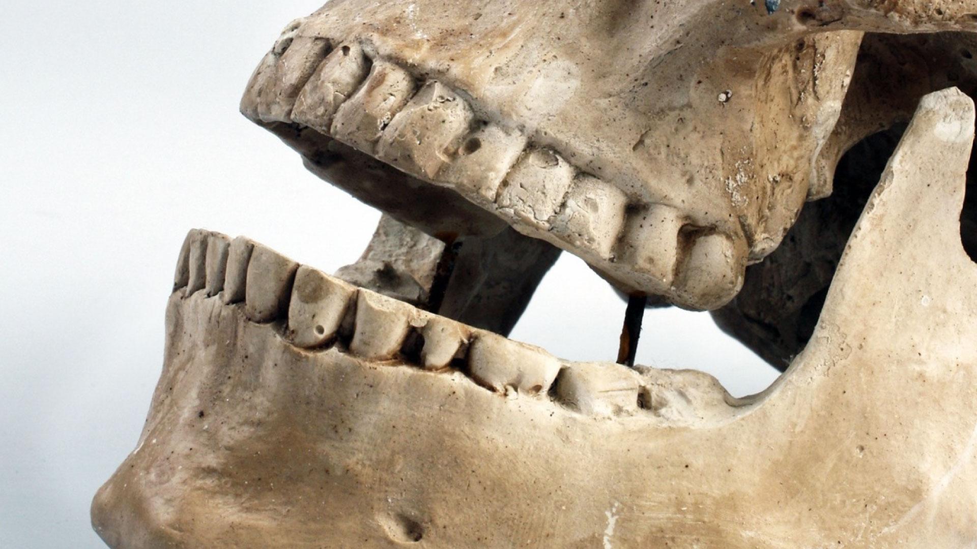 Masterclass Anatomía dental. Forma de dientes