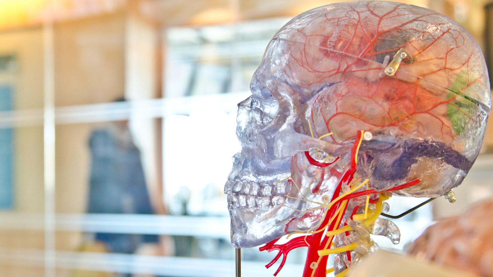Masterclass Anatomía aplicada a la Odontología (II)