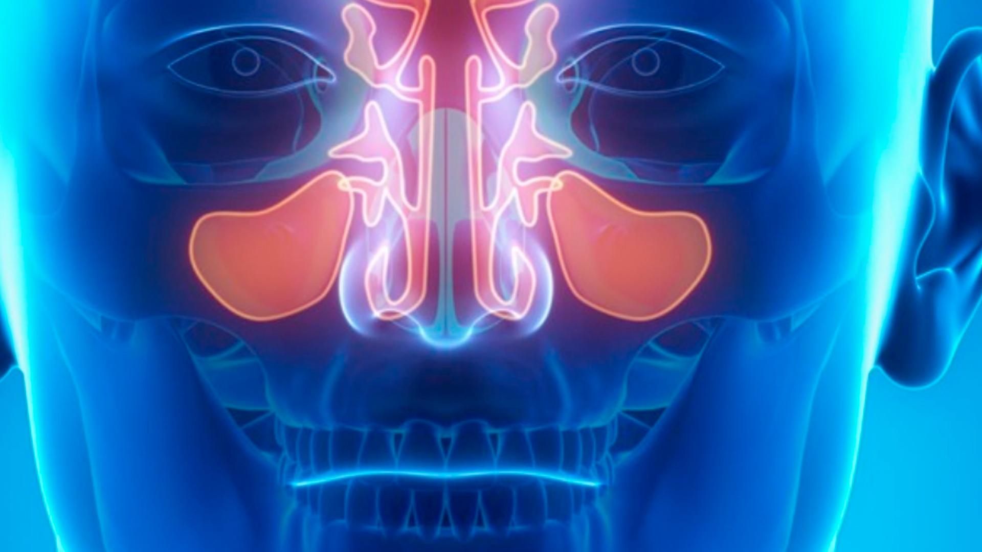 La masterclass de odontología Antes y ahora en sinus lift. ¿Qué hemos cambiado? forma parte de nuestro catálogo de masterclass de Knotgroup Dental Institute